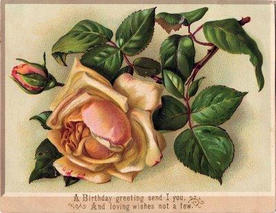Graphics fairy - Vicorian apricot cabbage rose